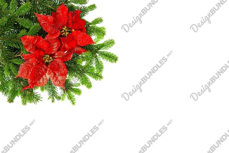 Christmas background red poinsettia flower pine branches example image 1