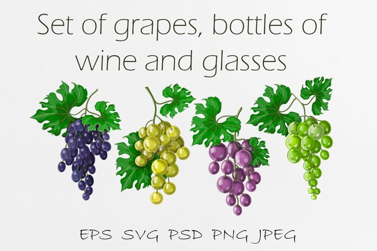 Big set of illustrations of grapes, wine bottles and glasses