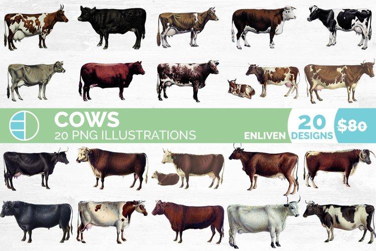 Cow Clipart Bundle