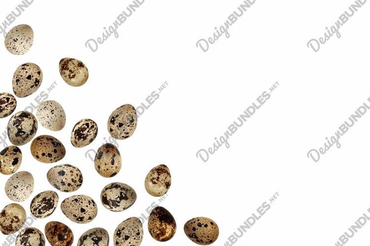 Quail eggs bird animal food isolated frame white background example image 1