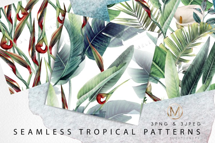 Tropical patterns, Watercolor floral cliparts example image 1