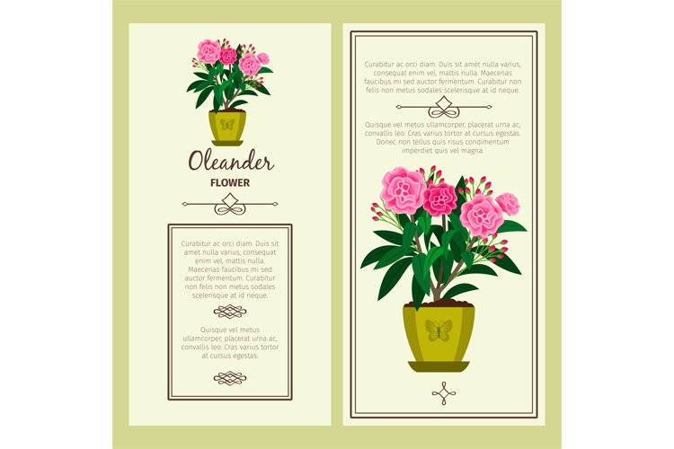 Oleander flower in pot banners example image 1