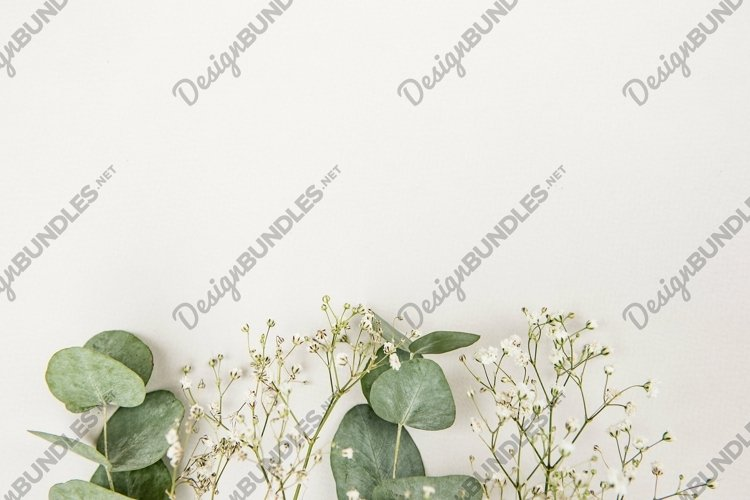 Frame made of green Eucalyptus populus leaves and gypsophila example image 1