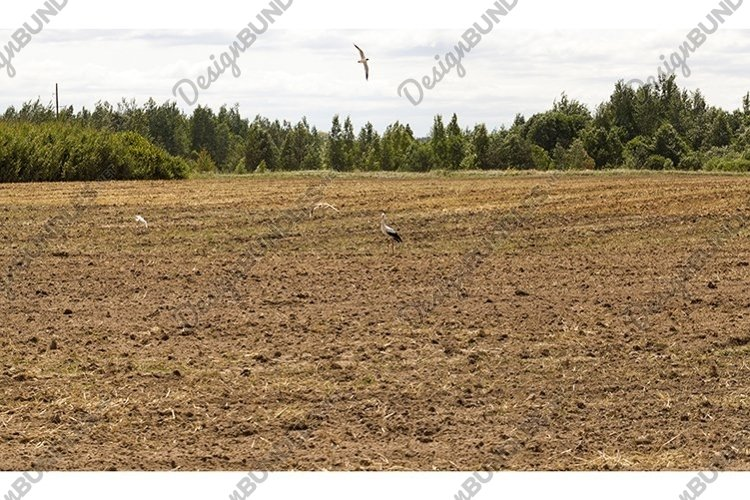 storks on the field example image 1