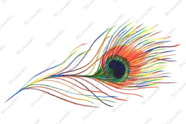 Rainbow colorful peacock bird feather vector single isolated example image 1