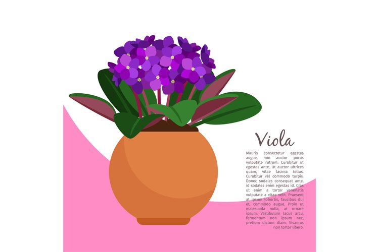 Viola plant in pot banner template example image 1
