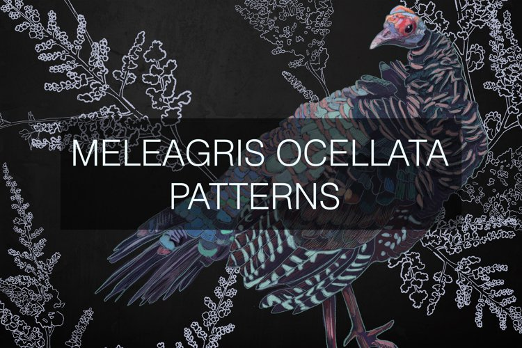 Meleagris ocellata patterns example image 1