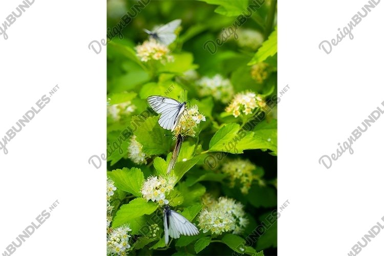 Stock Photo - Branch of a tree with white flowers close-up example image 1