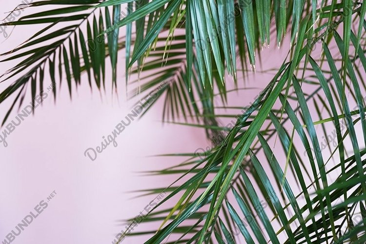 palm green leaves on pink, tropical background example image 1