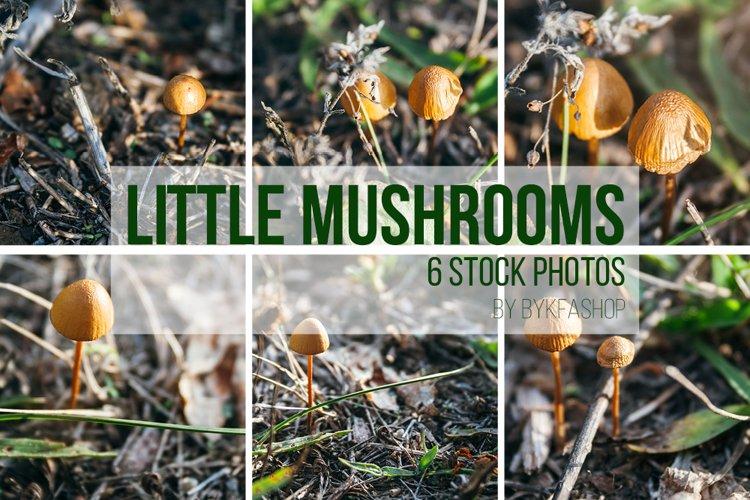 Small Mushrooms Stock Photo Bundle example image 1