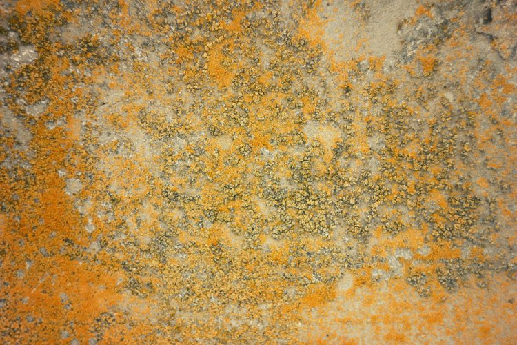 the texture of the concrete with the moss example image 1