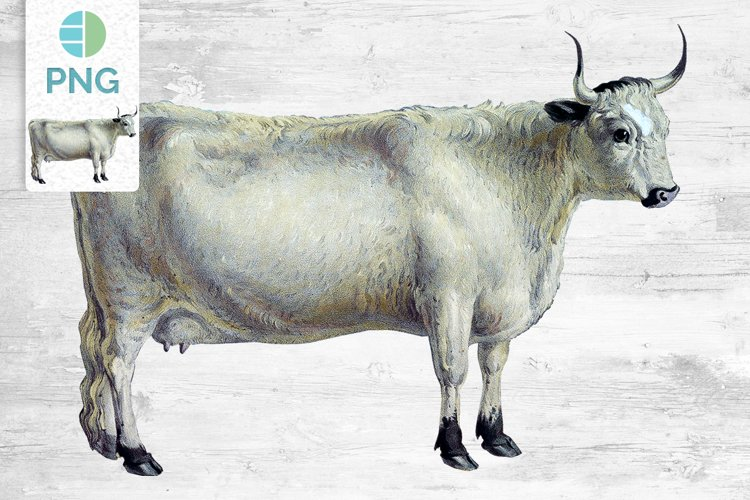 Cow Clipart White Forest
