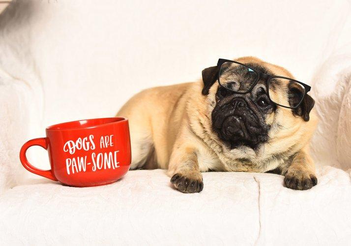 Dog Lovers SVG Cut File Bundle - Free Design of The Week Design0