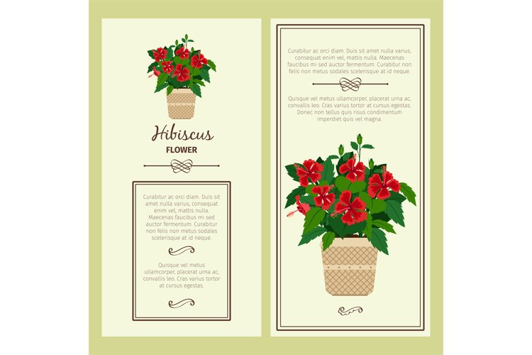 Hibiscus flower in pot banners example image 1