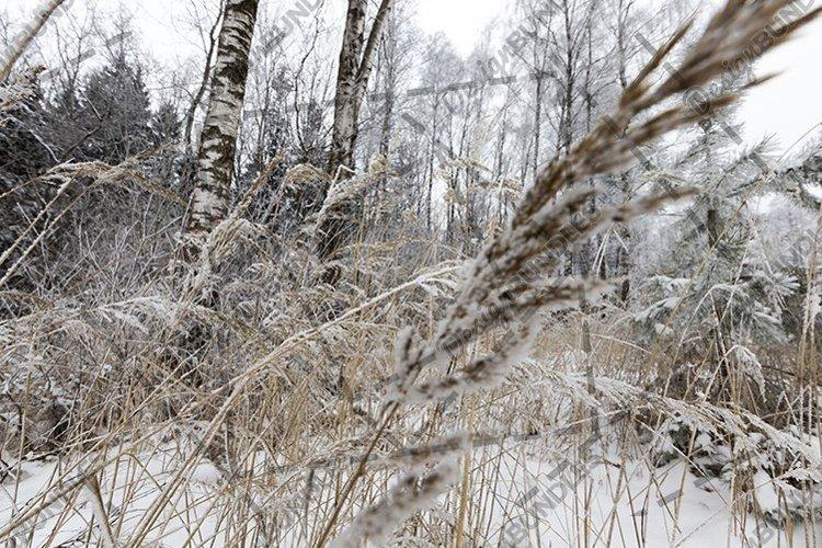 Winter landscape example image 1