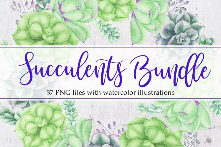Succulents Bundle