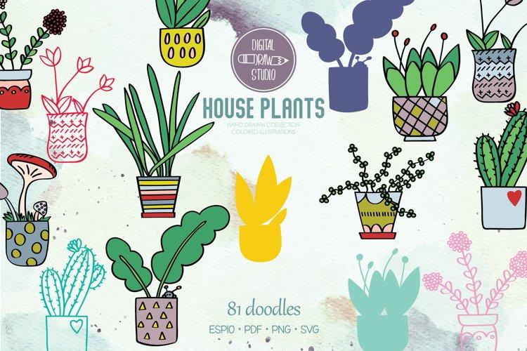 House Plants Color, Cactus, Flower Pot, Hanging Indoor Plant