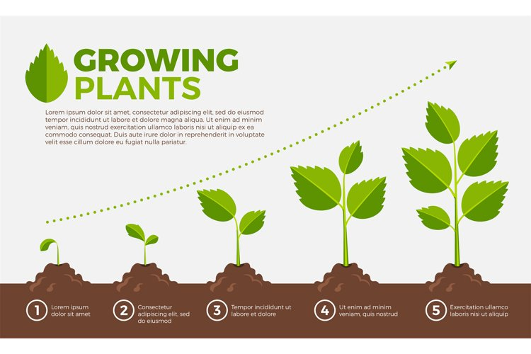 Different steps of growing plants. Vector illustration in ca example image 1