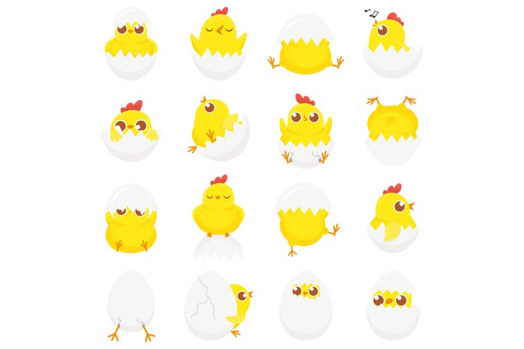 Cute chicken in egg. Easter baby chick, newborn chickens in example image 1