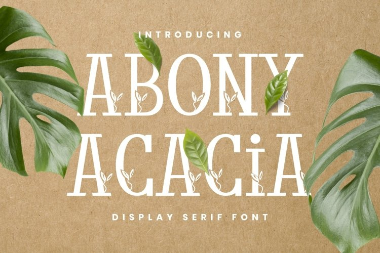 Abony Acacia Font example image 1