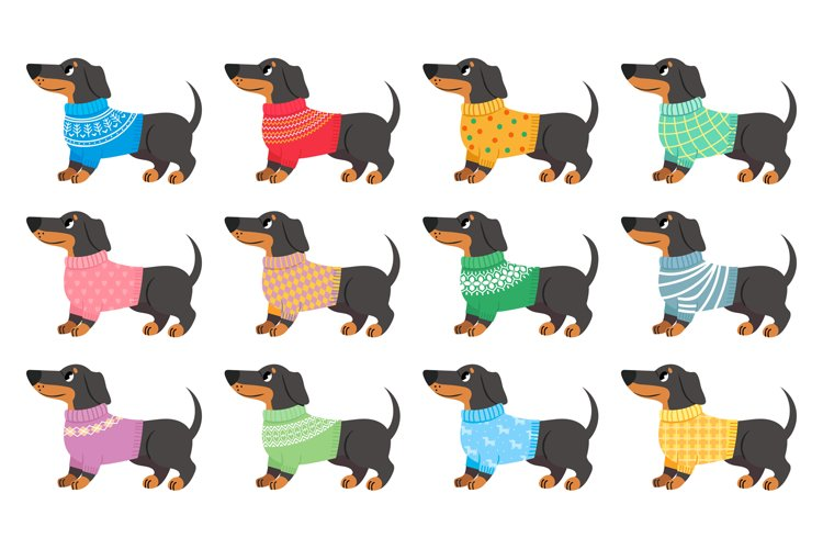 Dachshund clothes. Dogs wear with trendy patterns, puppy in