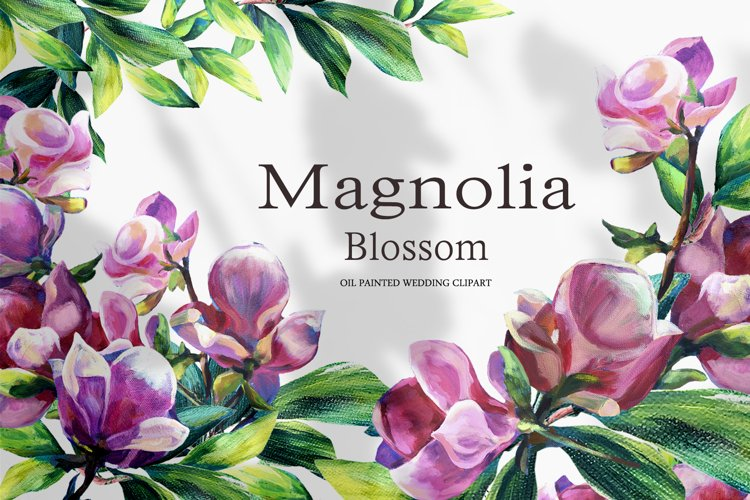 Magnolia blossom - hand painted clipart
