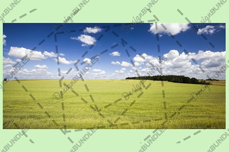 beautiful cereal field example image 1