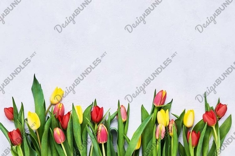 Border of red and yellow tulips on light background. example image 1