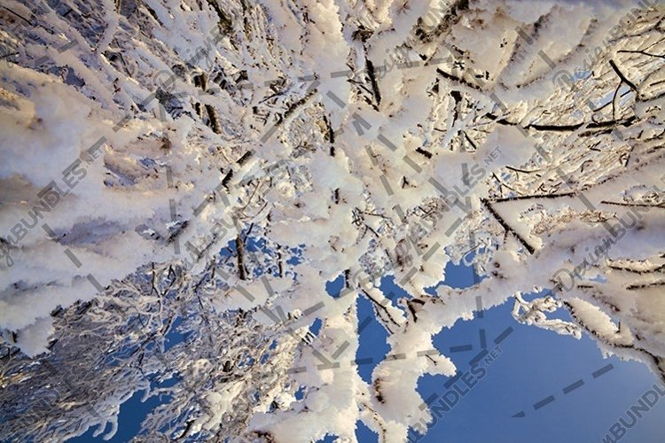 birch covered with white cold snow example image 1