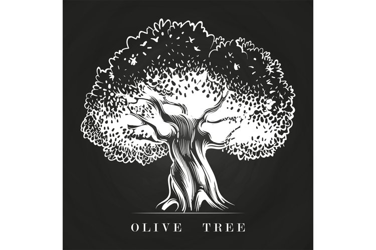 Hand drawn old olive tree on chalkboard example image 1