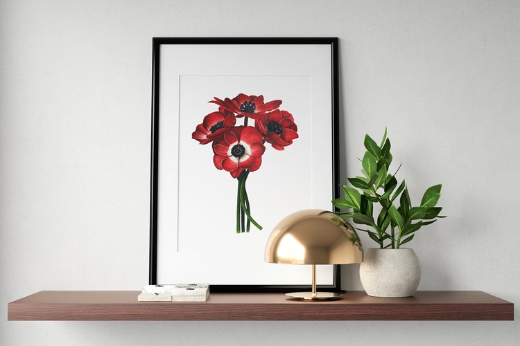 Watercolor botanical illustration. Red Anemones - wall art example image 1