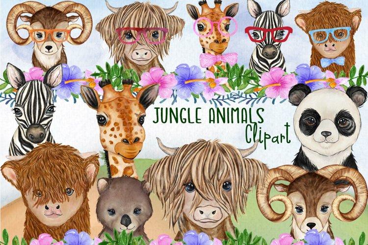 Jungle animals Safari Animals Funny animals, Wild Animals
