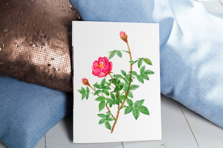Red Vintage Flowers, Botanical IlIustration, Vintage Rose example image 1