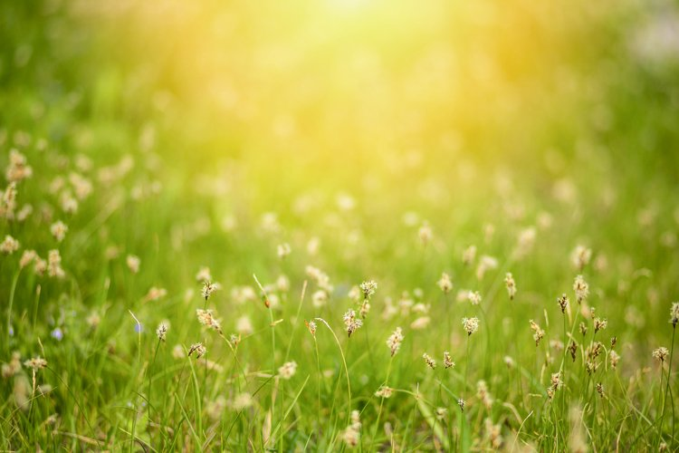 floral background with space for text. Soft focus example image 1