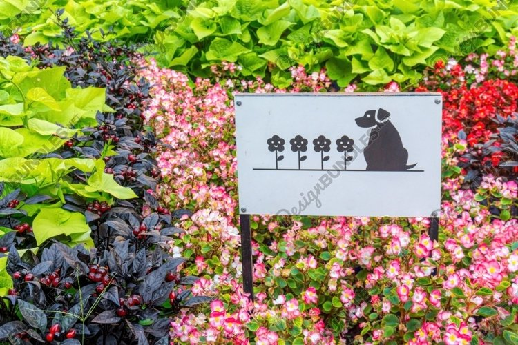 Colorful flowerbed and sign prohibiting dog walking example image 1