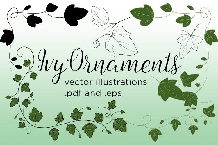 Ivy Vector Illustrations example image 1