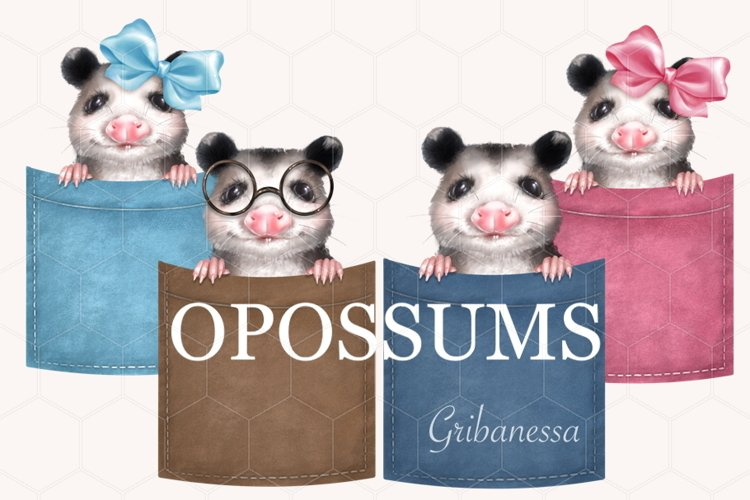 Opossums in pockets example image 1