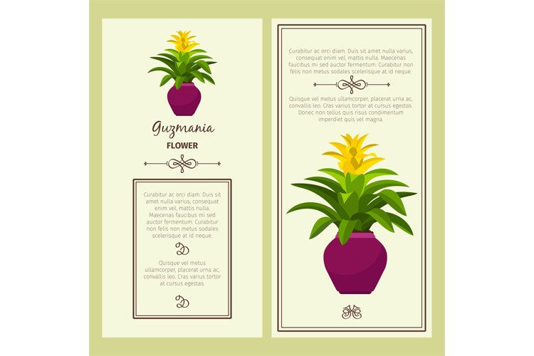 Guzmania flower in pot banners example image 1