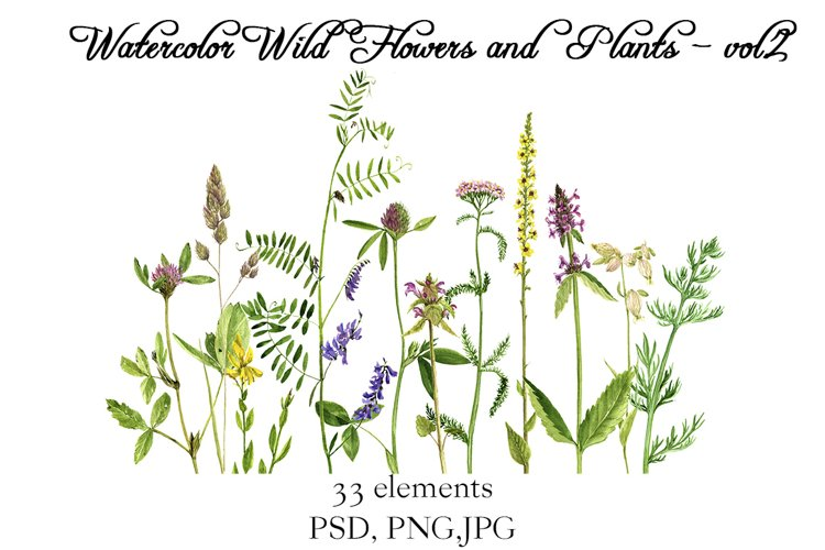 Watercolor Wild Flowers and Plants - vol.2