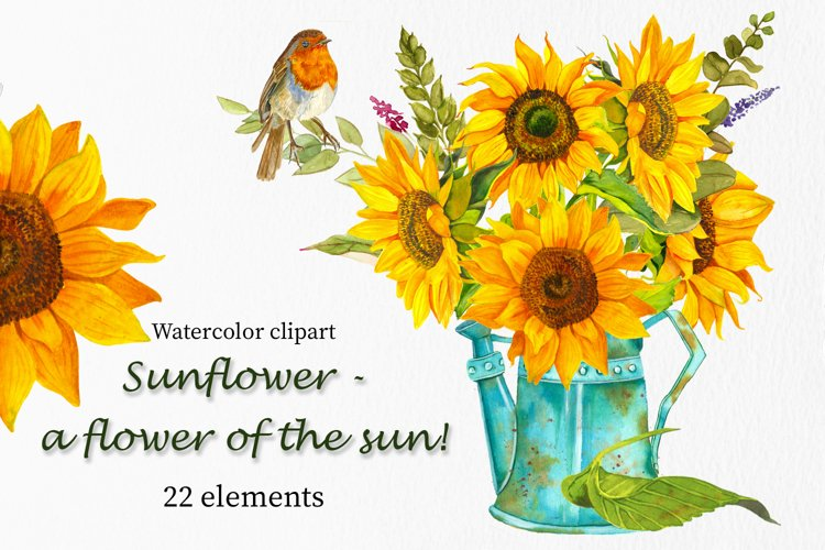 Sunflower - a flower of the sun! Watercolor clipart