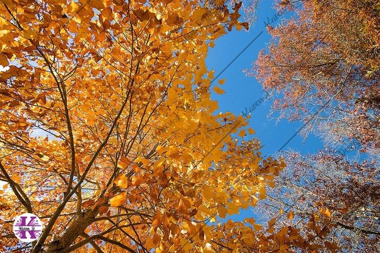 Autumn Trees photo example image 1