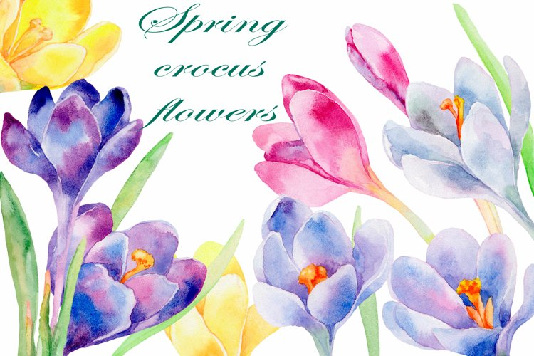 Spring crocus flowers watercolor clipart collection
