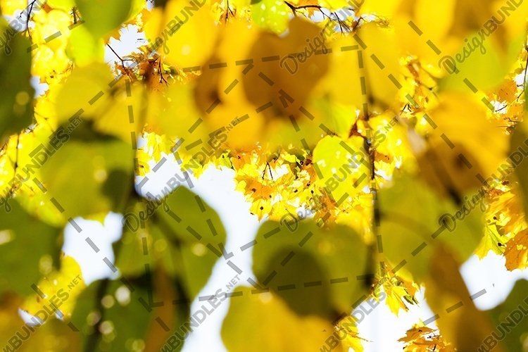 10 photos of autumn nature example image 1