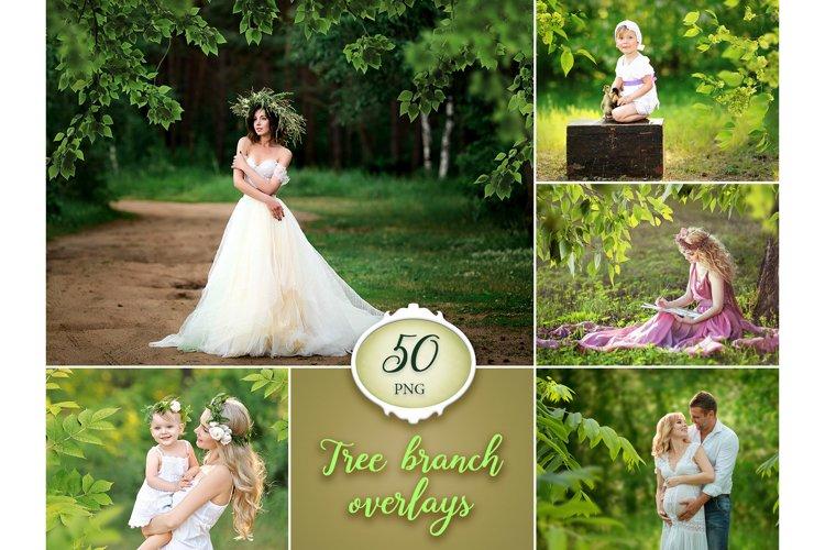 50 Tree Branch Photo Overlays example image 1