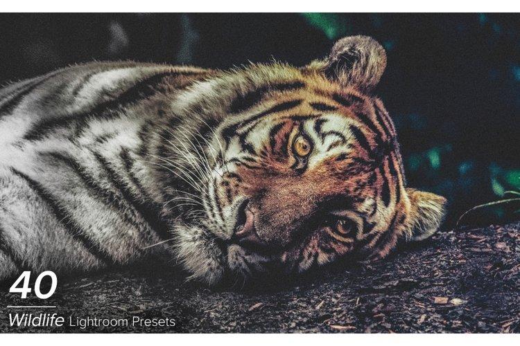 40 Wildlife Lightroom Presets example image 1