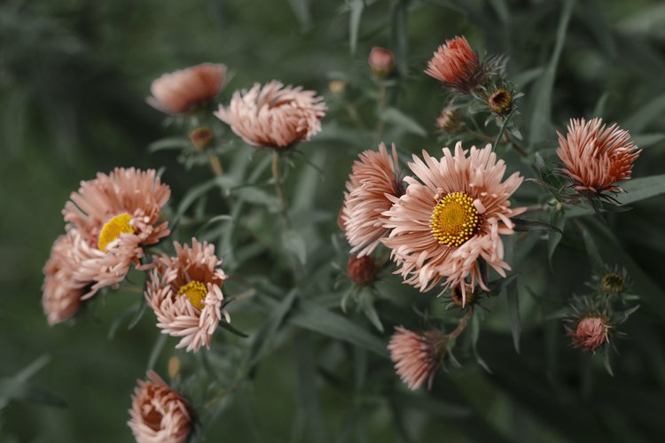 Pale orange flowers on a green background. example image 1