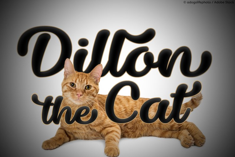 Dillon the Cat example image 1