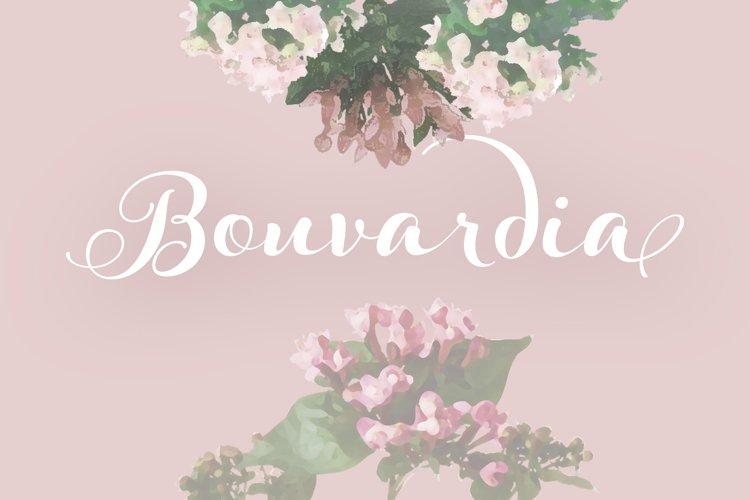 Bouvardia example image 1