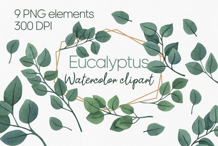 Cute watercolor eucalyptus clipart PNG