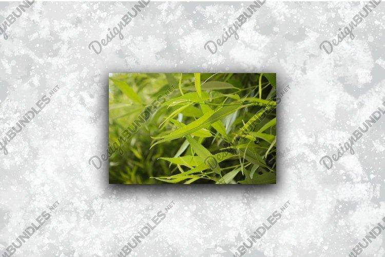 Green grass in fresh morning sun closeup picture